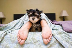 ¿Debería tu perro dormir en la cama contigo?