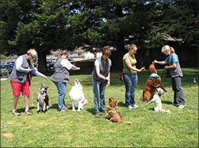 5 maneras de enseñar a tu perro a hacer trucos pueden mejorar el entrenamiento