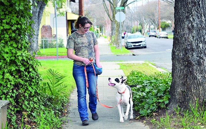 La correa suelta caminando: Entrenar a su perro para que no tire