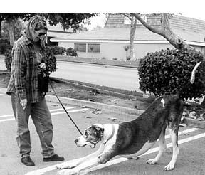 Cuando tu perro bien entrenado se vuelve agresivo, actúa rápido.
