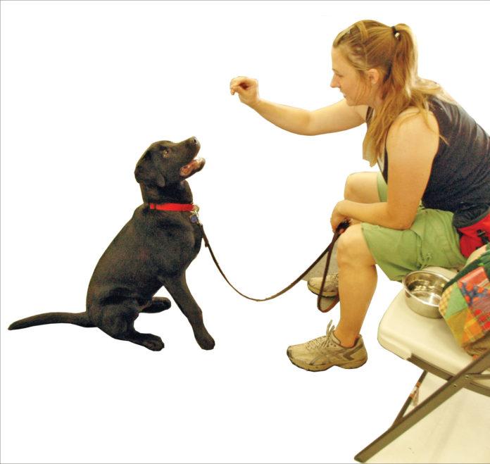 5 maneras de ayudar a su perro a aprender las claves