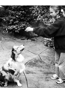 Los mejores métodos de entrenamiento de perros