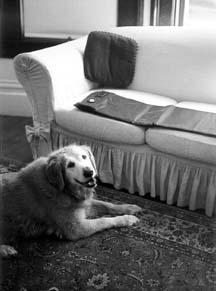 Cómo mantener a los perros fuera del sofá