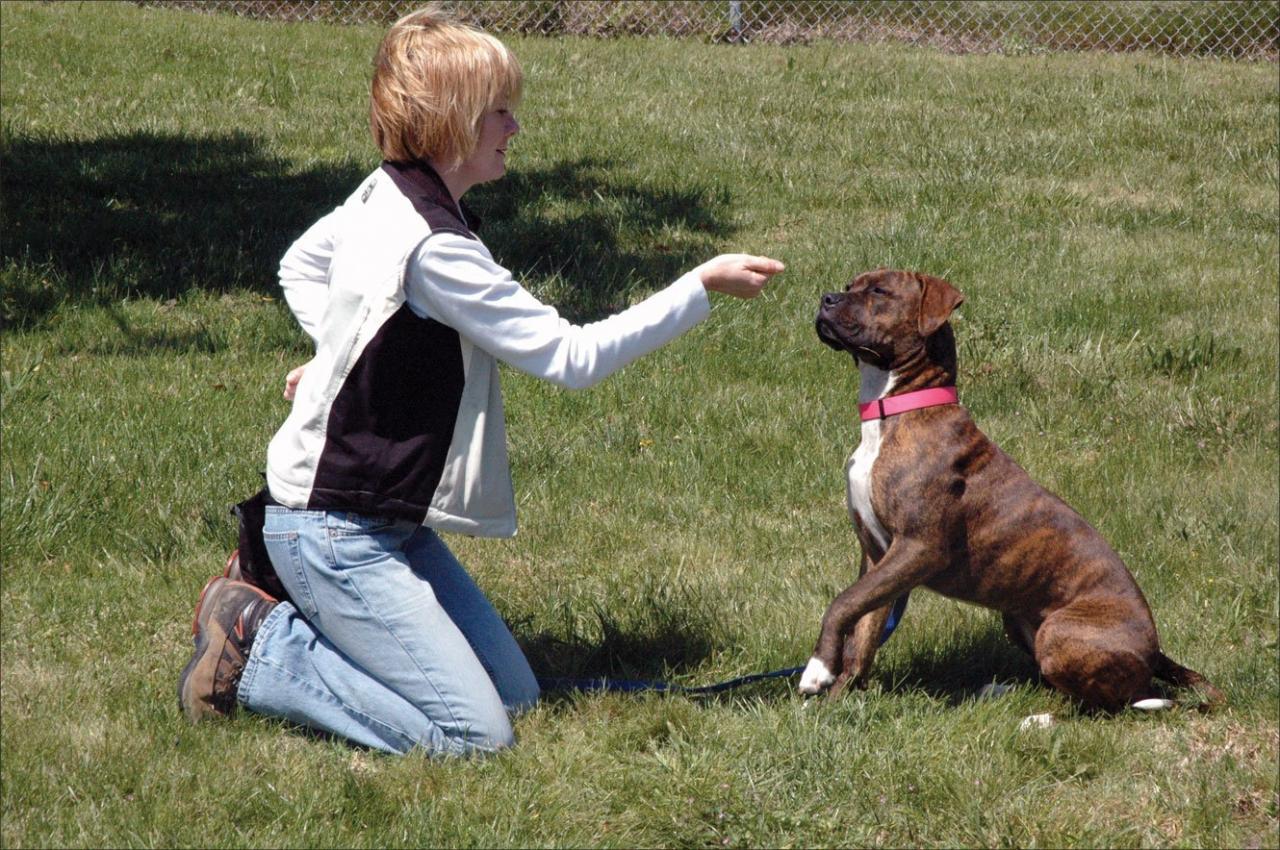 Cómo hacer que un perro se comporte