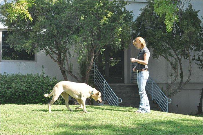 Juegos para crear un comportamiento fiable de recuerdo para su perro