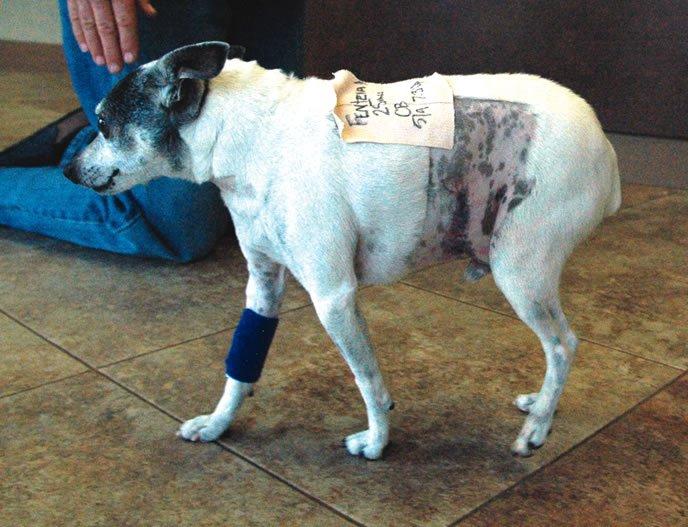 Déle a su perro una recuperación sin problemas