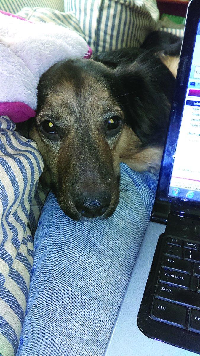 """Chistes de """"Doggy Inside"""": Los indicios poco convencionales que nuestros perros aprenden"""