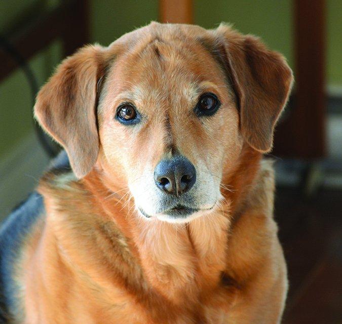 ¿Cuánto entrenamiento necesita realmente su perro?