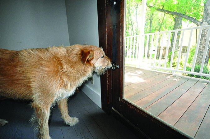 Cómo entrenar a su perro para ir al baño afuera