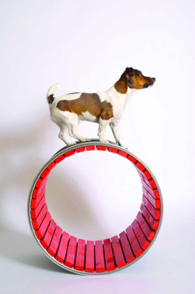 5 Beneficios de entrenar a tu perro con trucos