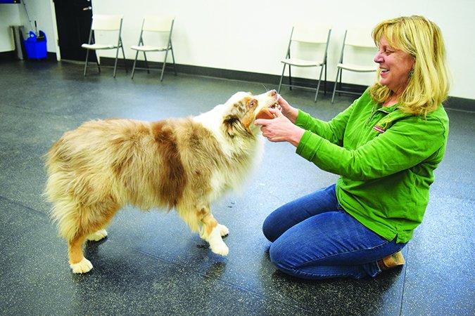 Enseñe a su perro a buscar entrenando a su perro a amar la recuperación