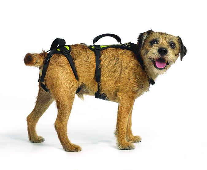 Productos para perros discapacitados