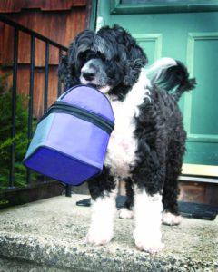 Enseñe a su perro a ayudar con las tareas de la casa