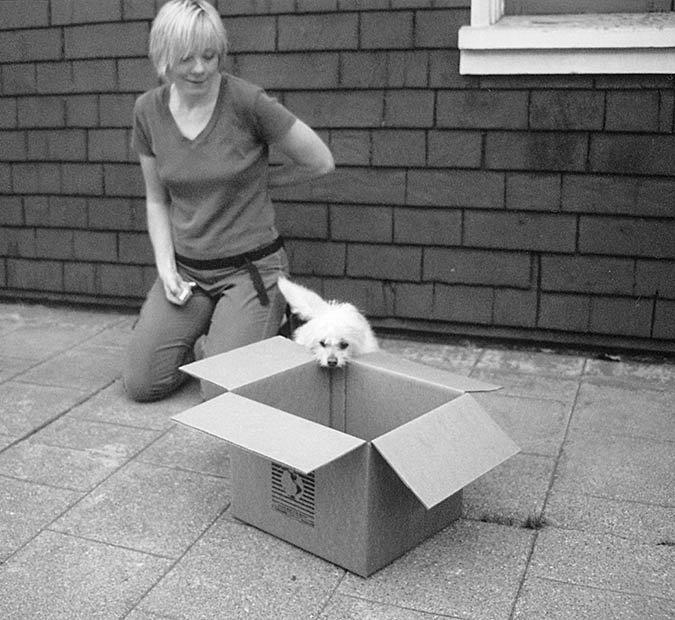 Divertidas técnicas de entrenamiento de perros usando la forma!