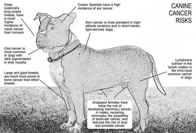 La crisis del cáncer canino