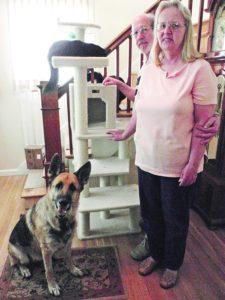 El mantenimiento de la paz entre perros y gatos