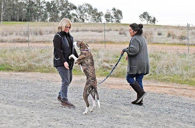 El comportamiento de tu perro: Cuándo manejar, cuándo entrenar