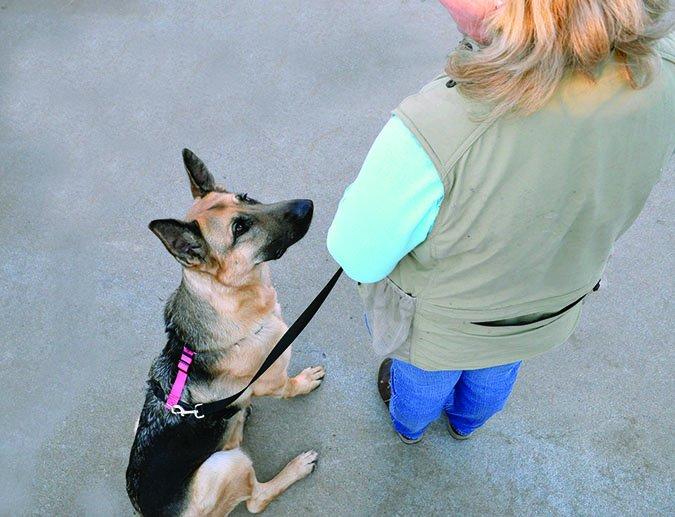 """Darle forma a la """"sentada"""" de tu perro"""