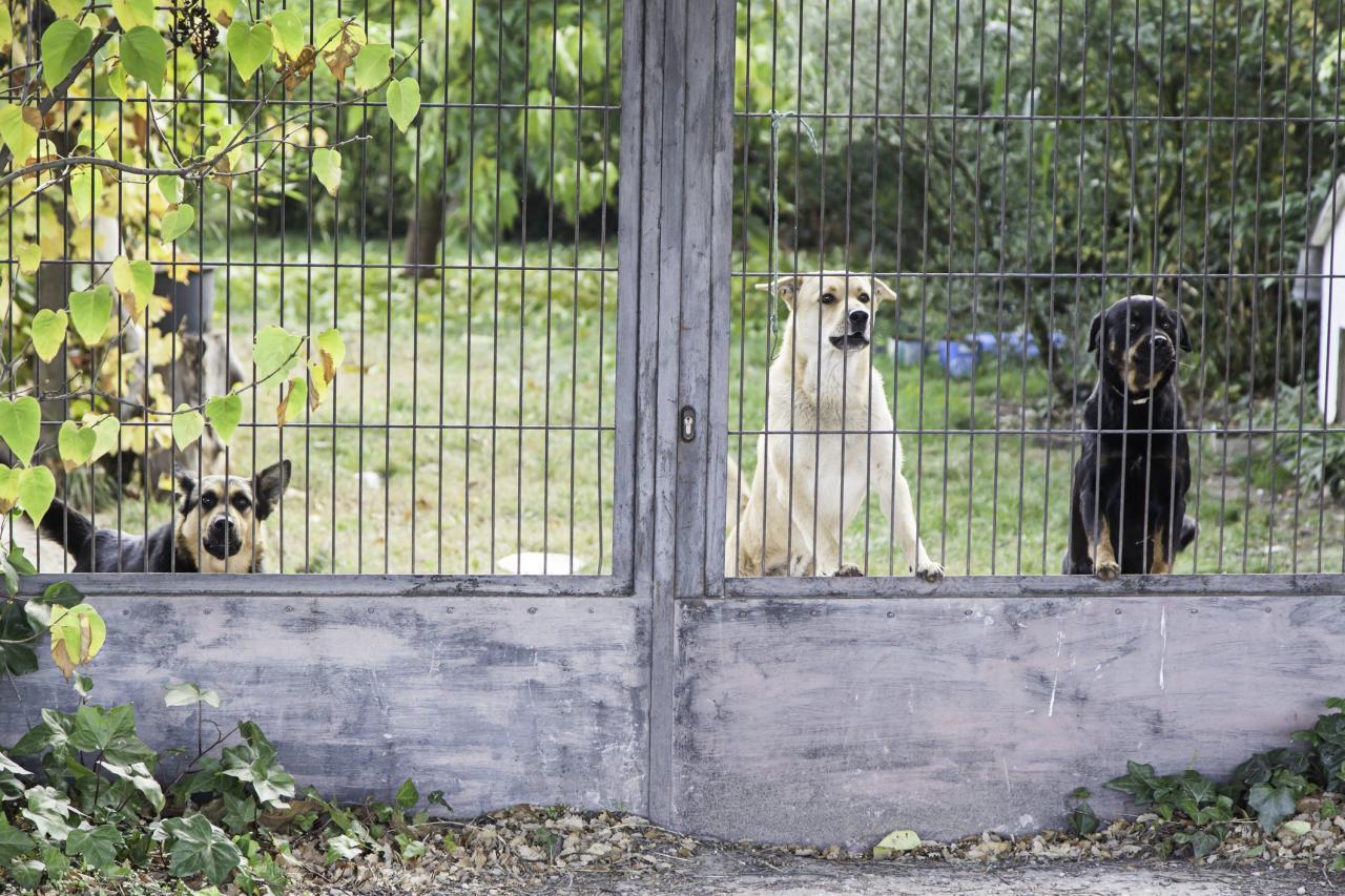 Mantener a su perro en contacto