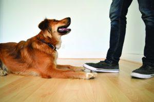 """Cómo enseñar a un perro a """"dejarlo"""""""