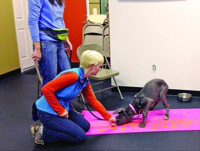 Los 7 hábitos de los dueños de perros altamente efectivos