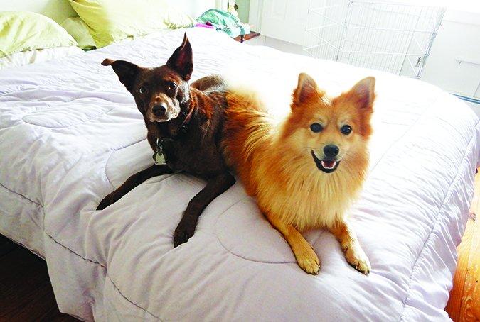 Cómo mantener a los perros alejados de los muebles - Si quieres