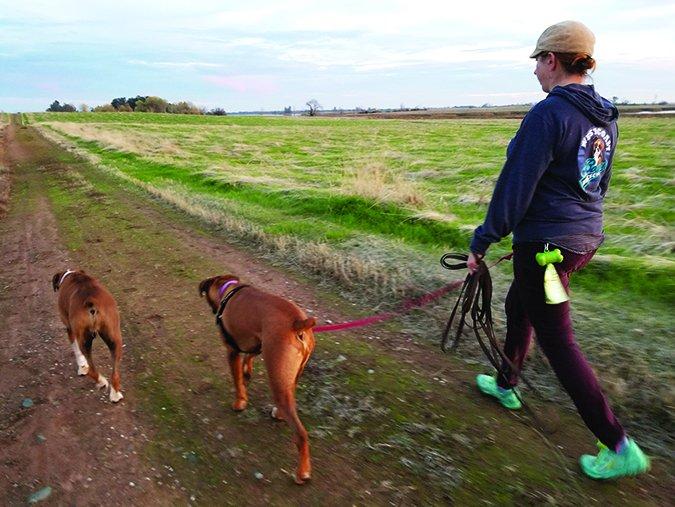 Cómo entrenar a su perro para paseos sin correa