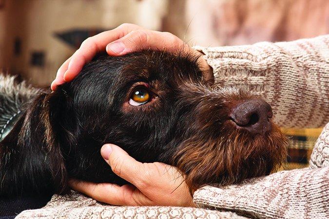 Consuele a su perro