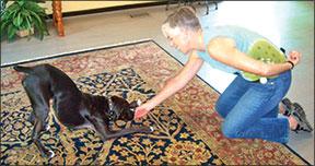 Entrenamiento profesional de perros en su casa
