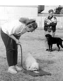 Una guía para elegir el mejor entrenador de perros para usted y su perro