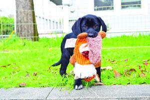 Déle a su cachorro un comienzo inteligente