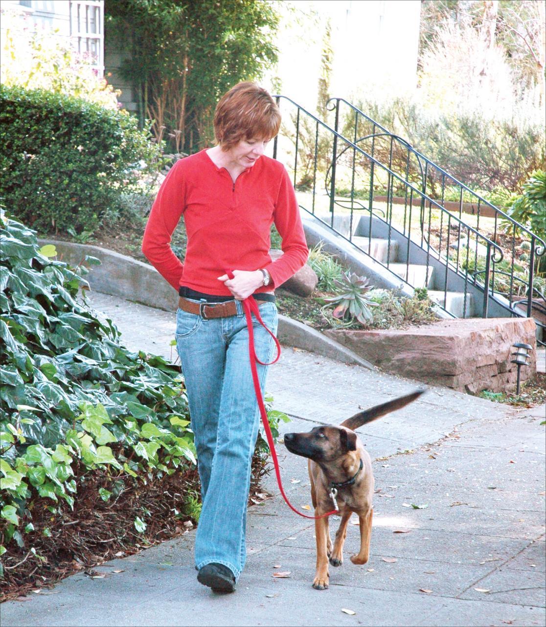 9 consejos de expertos para pasear a sus propios perros