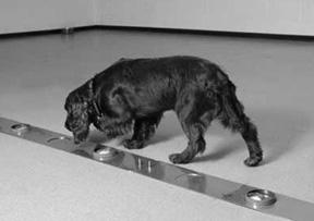 La capacidad de tu perro para rastrear olores
