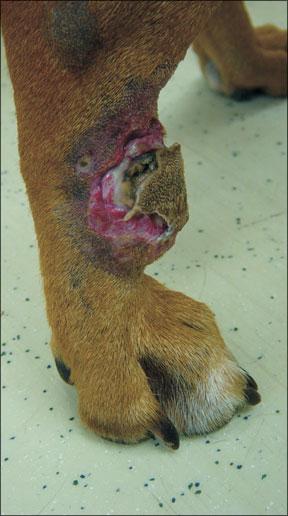 Actualización de la terapia para el cáncer canino