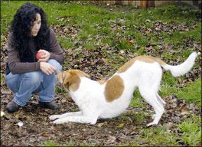 Estilos positivos de entrenamiento de perros