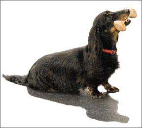 Deportes caninos: Obediencia competitiva