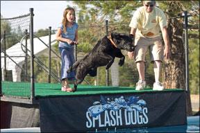 Salto de muelle para perros