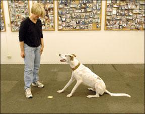"""Enseñar a tu perro a """"dejarlo"""" en el momento oportuno"""