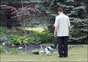 Cómo manejar los accidentes de su perro en la casa