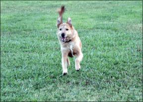 Reforzar el entrenamiento de su perro a lo largo de su vida