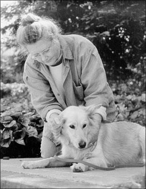 Métodos de curación canina frecuentemente utilizados para perros heridos