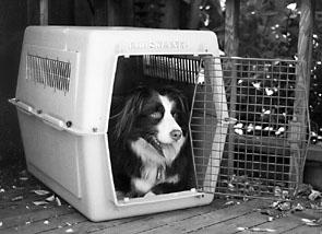 Entrenar correctamente a su perro
