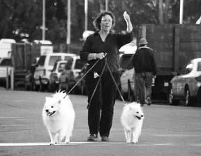 Términos y técnicas del entrenamiento positivo avanzado de perros