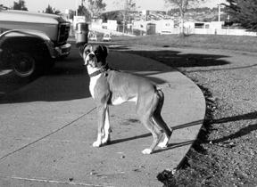 La salud del hígado en los perros