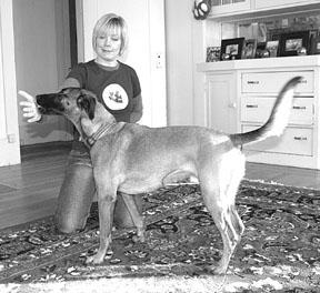Entrena a tu perro para que se dirija al objetivo