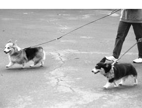 Entrenamiento de perros con señales de mano