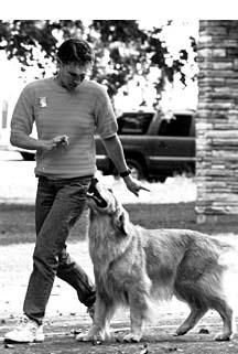 Entrenamiento del perro con discapacidad auditiva