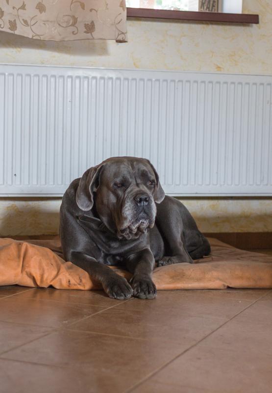 Cuidado con la alfombra envenenada