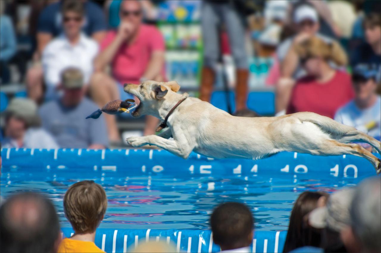 Lleve a su perro amante del agua a bucear en el muelle!