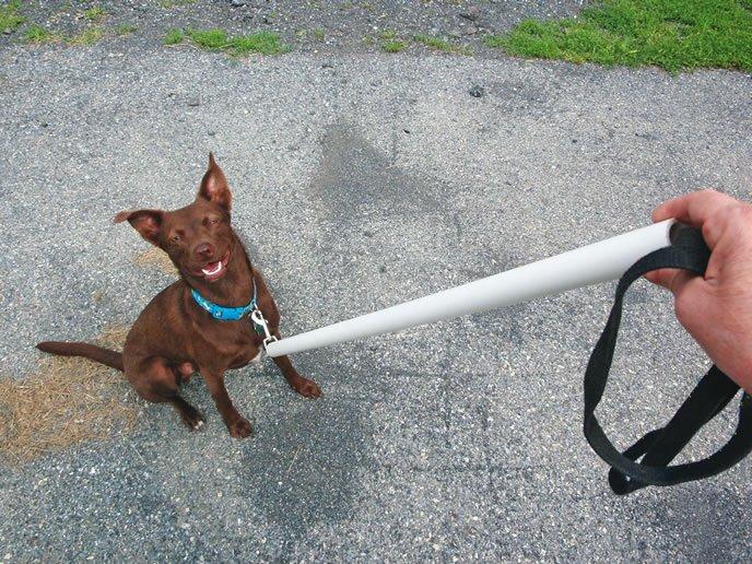 Cinco cosas que hacer cuando tu perro agarra la correa y no quiere...